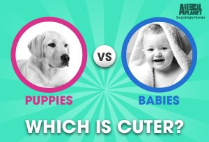 animals-or-puppies